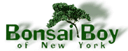 Click to Open Bonsai Boy Store