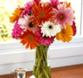 Organic Bouquet: Buy 15 Gerberas, Get 10 Free Limited Time Offer