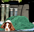 Muddy Paws: Drying Coats &towels From Only £8.99