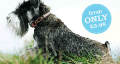 Muddy Paws: Collars & Tags From Only £3.99