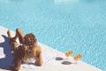 MarConfortHotels: Descuento Reserva Anticipada Verano 2015 Marconfort Essence