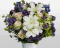 Flora2000: Special Sales HANUKKAH