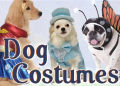 Costume Craze: Up To 80% Off Select Dog Costumes