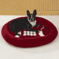 Fur My Pet: Football Sports Bed With Matching Toy For Only $30