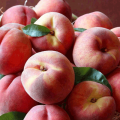 The Fruit Company: Fresh Peaches