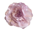 CynthiaRowley: Silk Flower Pin Only For $40
