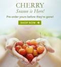 The Fruit Company: Sunny Days Call For Picnics