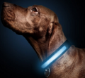 EntirelyPets: Free Light-up Collar