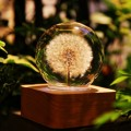 Coocepts: Dandelion Mood Light - 6cm For $279